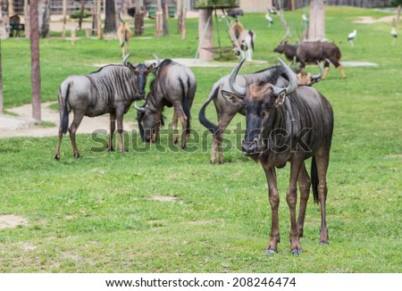 cow in the zoo - stock photo