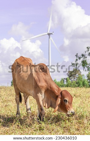 Cow is grazing on meadow near the big windmill in wind farm electricity plant, Korat province in Thailand. - stock photo