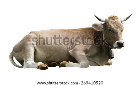 Cow, isolated on white background
