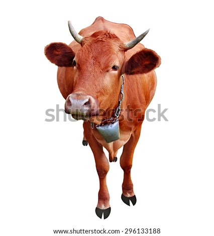 Cow isolated on white background - stock photo