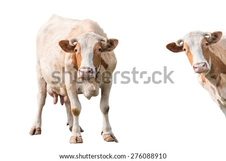 Cow isolated on white background, set - stock photo