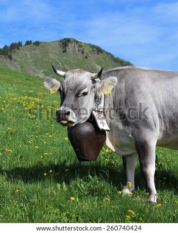Brown Swiss Cow  SoFontsy