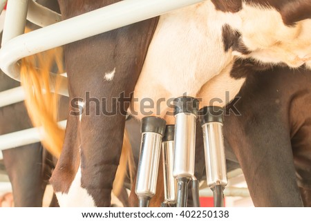 Cow milking facility and mechanized milking equipment - stock photo