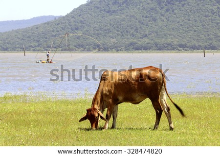cow on green fields