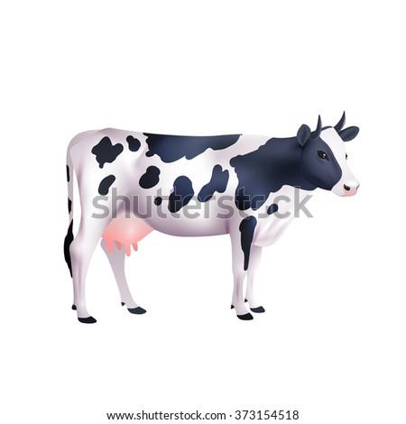Cow Realistic Illustration - stock photo