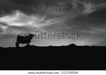Cow´s silhouette in the skyline