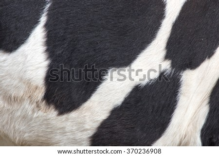 cow skin as a background