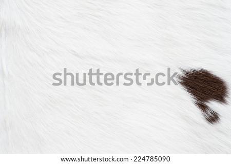 Cow skin texture - stock photo