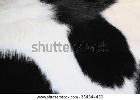 Cow skin texture for background - stock photo