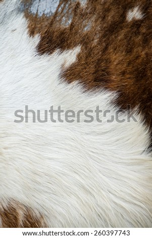 cow skin texture, template for background