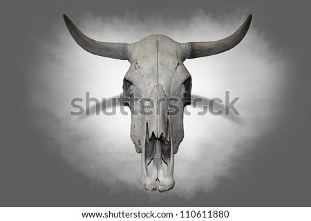 Cow skull on gray background.(Halloween image) - stock photo