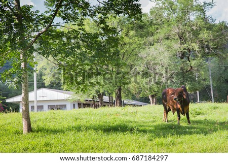 cow standing in a meadow under tree livestock
