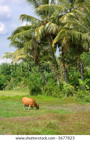Cow under palm trees