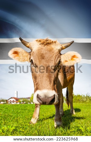 Cow with flag on background series - Botswana - stock photo
