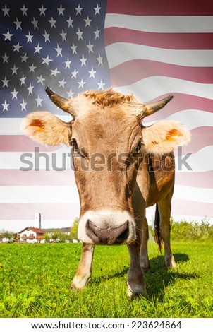 Cow with flag on background series - United States of America - stock photo