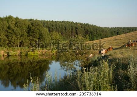 Cowa and lake - stock photo