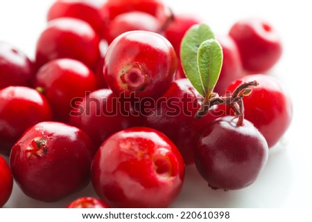 Cowberries macro on a white background. Vegetarian food. Wild red berry. - stock photo