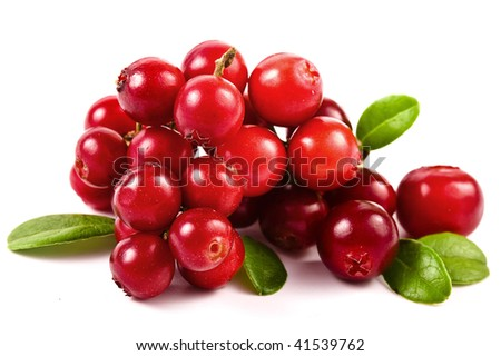 Cowberry Lingonberry (Vaccinium vitis-idaea)  isolated on white background - stock photo