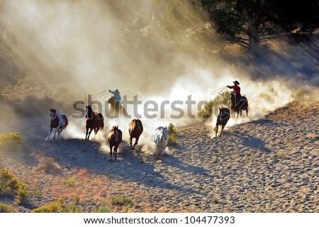 Cowboy and Cowgirl chasing wilding horses. roping and riding, with dust flying everywhere