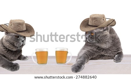 Cowboy cats drinking beer - stock photo