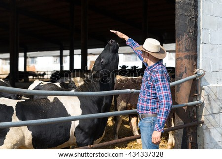Cowboy farmer is working on farm with dairy cows - stock photo