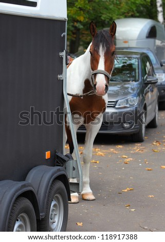 Cowboy trail horse waiting by a horsebox - stock photo