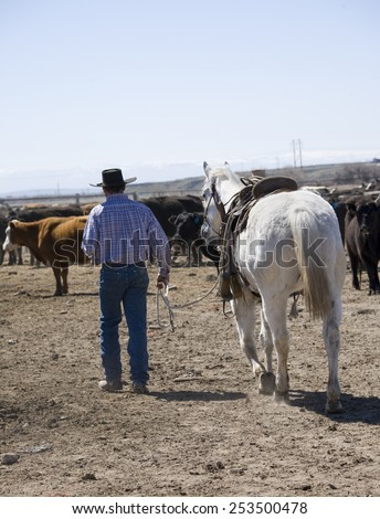 Cowboy walking with his horse towards herd of cattle - stock photo