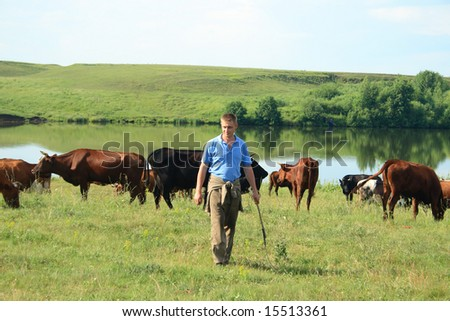 cowboy with cows on ranch - stock photo
