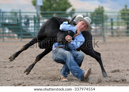 Cowboy wrestling a steer during a rodeo. - stock photo
