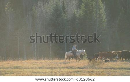 Cowboys herding cattle through a dusty autumn pasture - stock photo