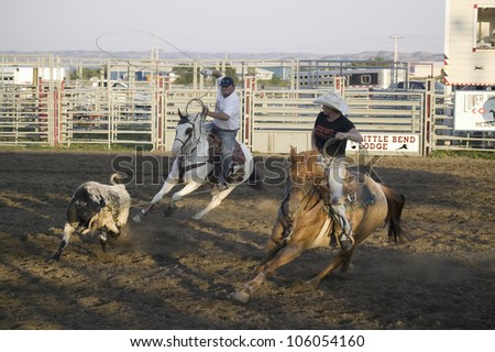 Cowboys lassoing cow at PRCA Rodeo at Lower Brule, Lyman County, Lower Brule Sioux Tribal Reservation, South Dakota, 58 miles Southeast of Pierre near Missouri River, August 10, 2007 - stock photo