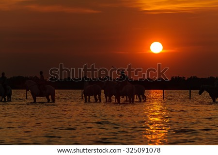 Cowboys silhouette on horse at sunset - stock photo