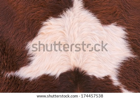 Cowhide, cow skin background close up