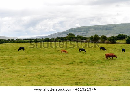 Cows and nature of Ireland.