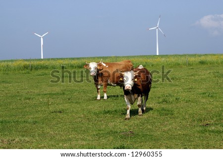 cows and wind-generators