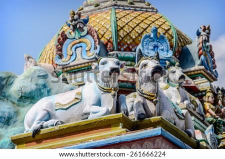 Cows as detail  of indian Kapaleeswarar temple , Chennai, India - stock photo