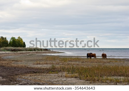 Cows at the coast in autumn