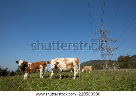 Cows emit a massive amount of methane through belching, an amount that is comparable to the pollution of a Car in a day. On the other hand Electricity is much more Nature Friendly - stock photo