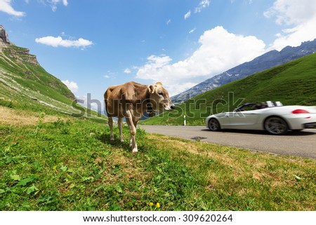 Cows grazing in a typical Alpine landscape - stock photo