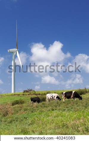 Cows grazing in green meadow next to a wind turbine, alternative energy, electricity generation - stock photo