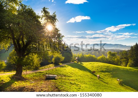 Cows grazing in the countryside in idyllic rural areas of Slovenia, Europe. Morning sunbeams shine trough the branches of apple tree. - stock photo