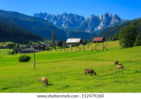 Cows grazing on alpine meadow with the Alps mountains in the background in summer, Gosau village, Austria - stock photo