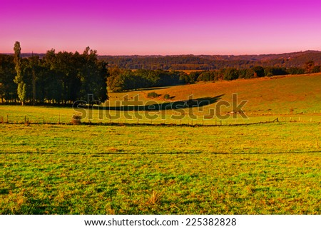Cows Grazing on Alpine Meadows in France at Sunrise - stock photo