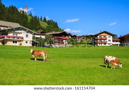 Cows grazing on green alpine meadow in Strassen village, Karnten, The Alps, Austria - stock photo