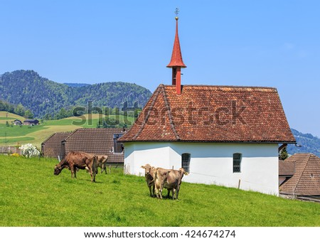 Cows grazing on green grass at a small chapel in the Swiss canton of Nidwalden in the beginning of May. - stock photo