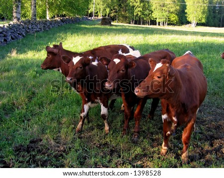 Cows in a green meadow. - stock photo