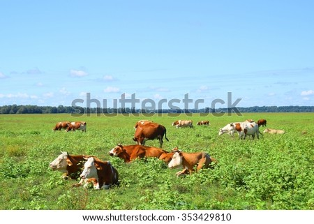 Cows in pasture on farm - stock photo