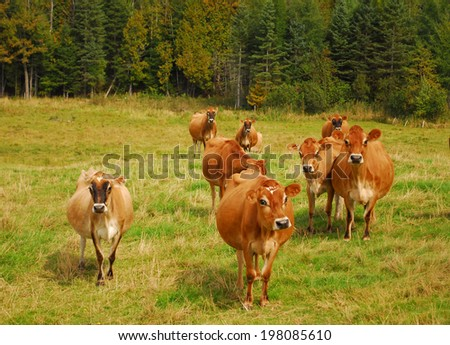 Cows in scenic meadow - stock photo