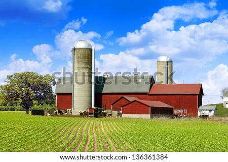 Cows Milk Farm - stock photo