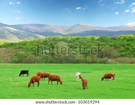Cows on farm. Natural composition - stock photo